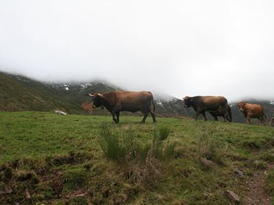 The park in Asturias